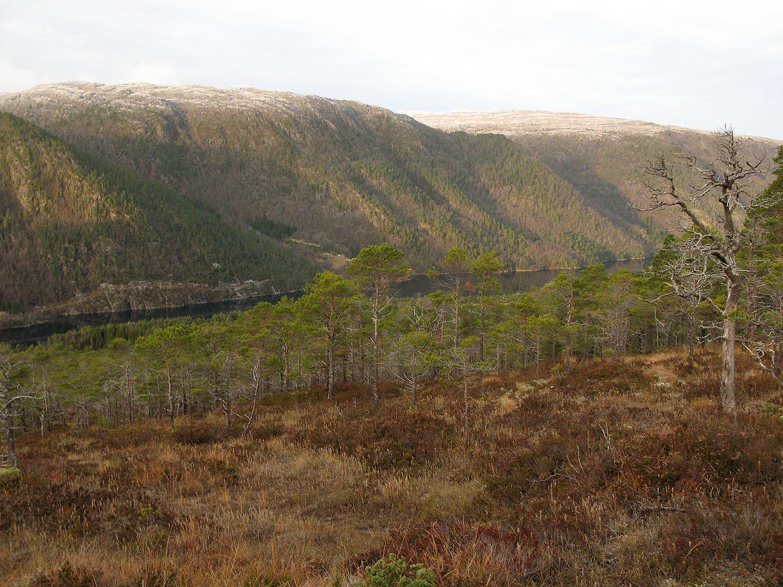 IMG_6715vfjord